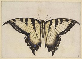 first-colony-foundation-butterfly